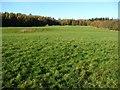 SD3778 : Seven Acres farmland, Cartmel by Christine Johnstone