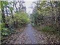 SJ8450 : Bradwell Woods Greenway by Jonathan Hutchins