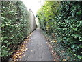 TQ1656 : Path from St John's Avenue to Kingscroft Road by David Howard