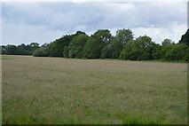 TQ5243 : Grassy meadow by N Chadwick