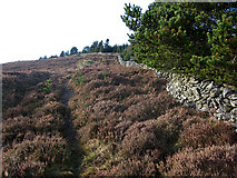 S8757 : Heather, Wall and Forest by kevin higgins