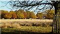 TQ1470 : Autumn in Bushy Park, 3 by Jonathan Billinger