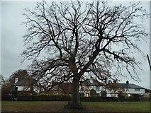 TQ2255 : The green, Walton on the Hill by David Howard