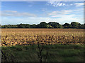 SP3274 : Part-ploughed field southeast of the A46 layby near King's Hill by Robin Stott