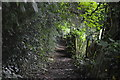 TR2647 : North Downs Way by N Chadwick