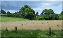 TQ5044 : Field near Weller's Town by N Chadwick