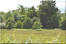 TQ4944 : Moor Wood by N Chadwick
