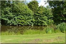 TQ4945 : Pond by Chiddingstone Rd by N Chadwick