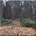 SP9333 : Path near Woburn by Dave Thompson