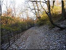NS5666 : Footpath, Kelvingrove Park by Richard Sutcliffe
