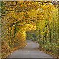 TQ3997 : Looking up Lippitts Hill in Autumn  by Roger Jones