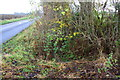 SP8847 : Ditch beside High Street north of Gun Lane junction by Roger Templeman