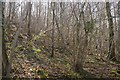 SO4281 : Sallow Coppice by Richard Webb