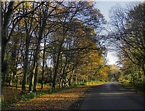 TQ3245 : Woodland in November, Outwood Common by Stefan Czapski