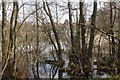 SO3962 : Pearl Lake, Shobdon by Richard Webb