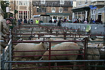 SP8699 : Uppingham's annual Fatstock Show 2016 by Chris