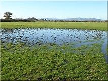 SO8845 : Dew pond by Philip Halling
