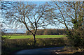 NZ2519 : Tree and field beyond stretch of abandoned road by Trevor Littlewood