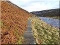 NY8228 : Boardwalk on the Pennine Way beside the River Tees by Oliver Dixon