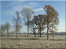 SO8844 : Trees in Croome Park by Philip Halling