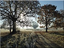 SO8844 : Frosty Croome Park by Philip Halling