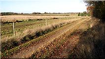 TG3502 : Farm track to Stone Lane by Evelyn Simak