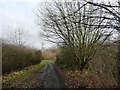 SE3803 : Early December, the Trans Pennine Trail near Wombwell by Christine Johnstone