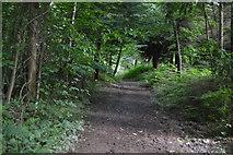 TQ5245 : Footpath, Redleaf Wood by N Chadwick
