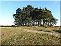 TQ4628 : Camp Hill Clump, Ashdown Forest by Marathon
