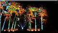 ST8590 : Westonbirt Arboretum Illuminations by Colin Park