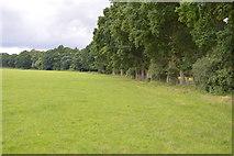 TQ5347 : Footpath by trees by N Chadwick