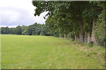 TQ5347 : Woodland edge by N Chadwick