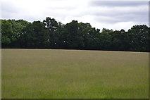 TQ5246 : Meadow north of Redleaf Wood by N Chadwick