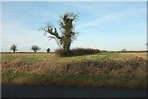 ST8080 : By Tormarton Road by Derek Harper