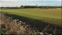 ST7981 : Arable field by Old Down Road by Derek Harper