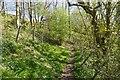 NY6712 : Path, Asby Gill by Richard Webb