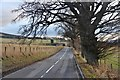 NN9558 : A924 above Pitlochry by Alan Reid