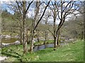 NN2331 : Alders beside the River Orchy by Richard Webb