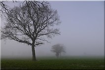 SO4386 : Site of a hedge by Richard Webb