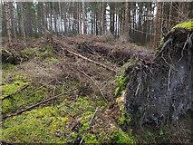 NH6454 : Storm damage, Tullich Wood by Julian Paren