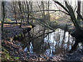 SJ5470 : Stream in Delamere Forest by Stephen Craven