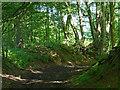 SK8531 : The Drift in Big Wood by Mat Fascione