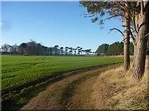 NT6378 : East Lothian Landscape : Large Field, Hedderwick Hill by Richard West