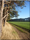 NT6378 : East Lothian Landscape : On The Edge by Richard West