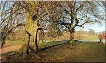 SE0754 : Trees by the Wharfe by Derek Harper