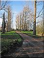 TL5779 : Quanea Hill: avenue near White Gates by John Sutton