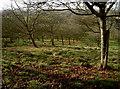 ST3351 : Apples galore by Neil Owen