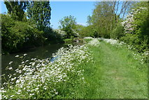 SK8336 : Towpath along the disused Grantham Canal by Mat Fascione