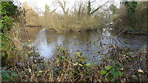 TQ0481 : Island in River Colne by Rob Emms