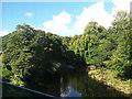 SX7565 : River Dart near Buckfastleigh by Stephen Craven